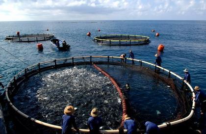 山东建立海洋与渔业信用红黑名单 12月起施行