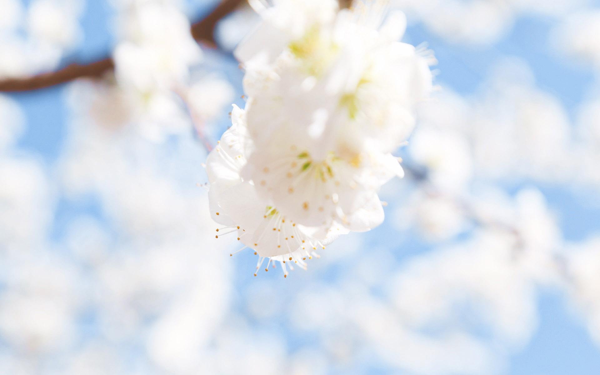 收好这份攻略!青岛发布桃花花期预报和观赏指南