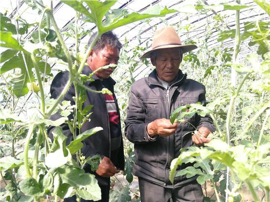 """援藏24年!山东帮藏族人民建起一个""""菜篮子"""""""