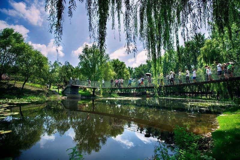 枣庄微山湖湿地.jpg