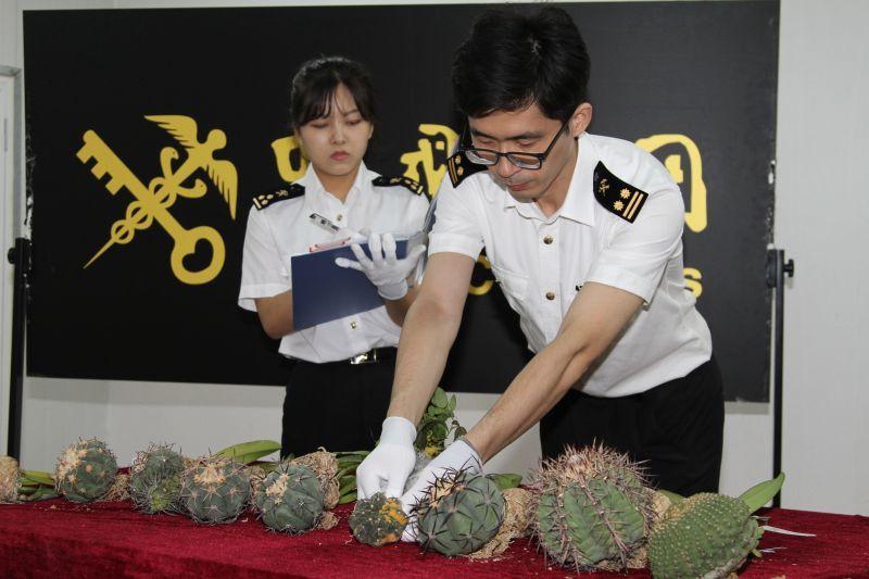 图为:海关关员现场检疫清点查获的植物种苗.jpg