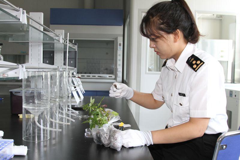 图为:海关关员对查获的植物种苗进行初筛检疫.jpg