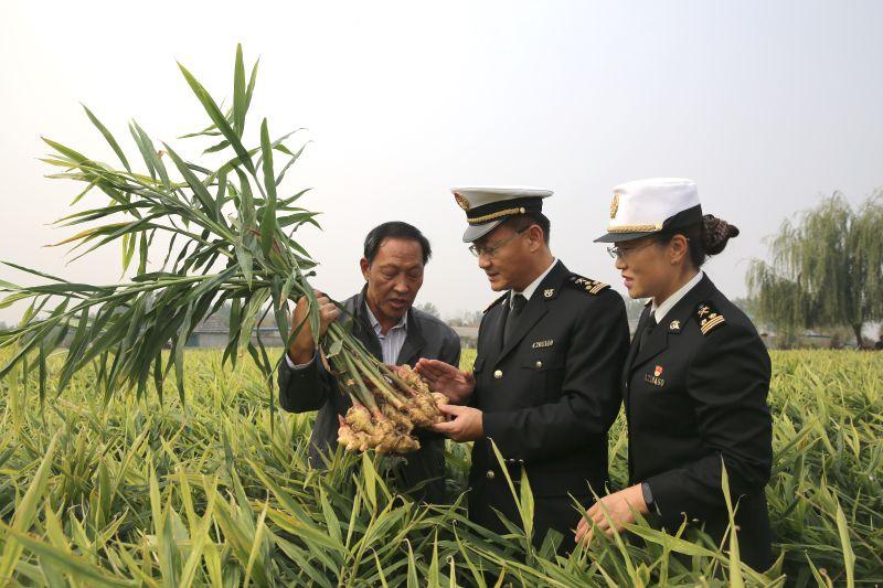 图为:海关关员在莒县大姜种植基地开展实地调研胡明文%20摄1.jpg
