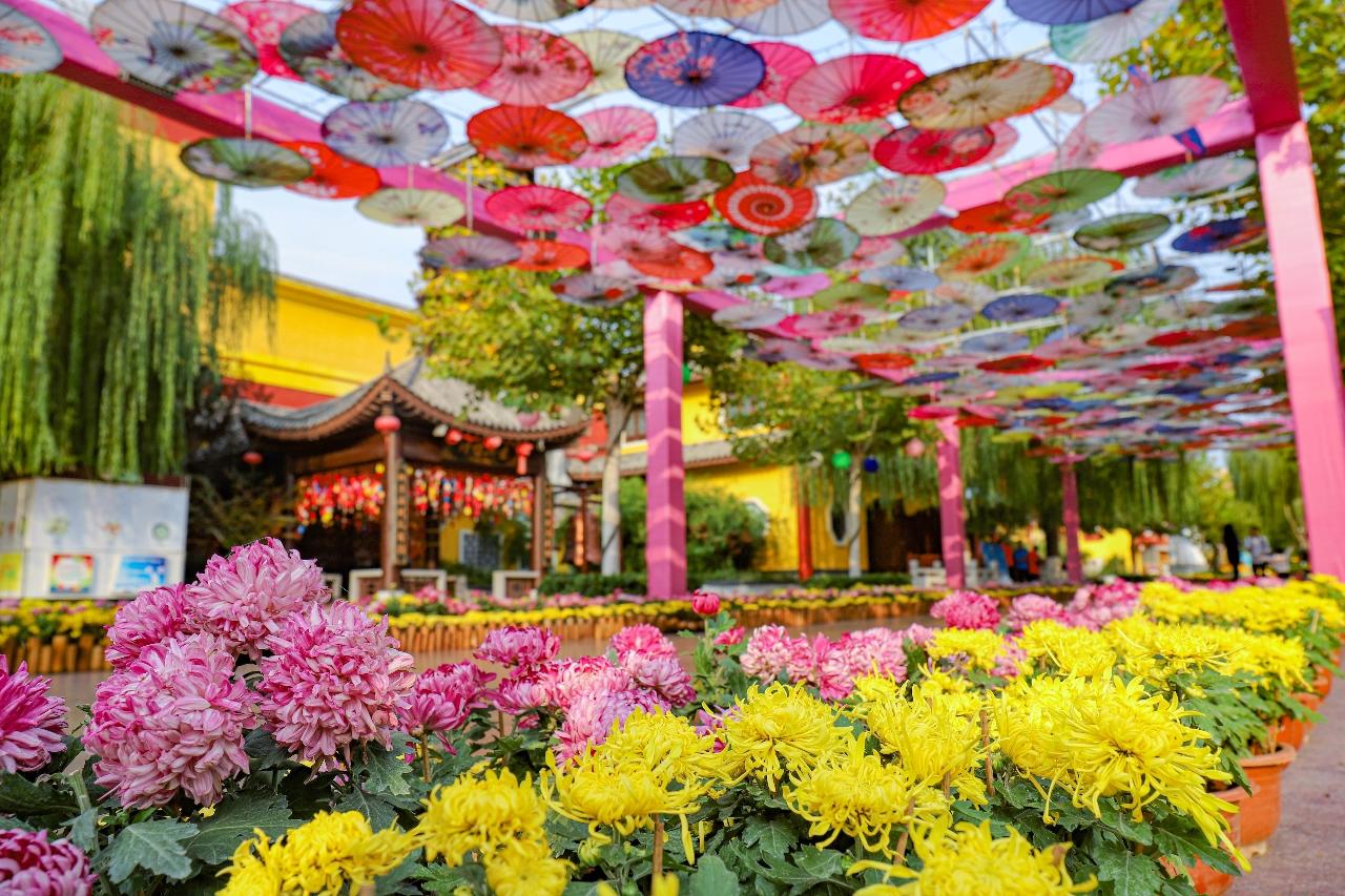 金秋十月,正值济南方特东方神画赏花文化节。在会场,每天都会带来众多非遗项目的演出,同时,今年还特设将非遗+文旅结合的形式,寓教于乐,反响较好。像女娲五彩石、牛郎织女等通过5D体验游玩形式,了解中国古典神话故事。赏花文化节,从10月13日到11月17日,每周六周日,景区会加开夜场,各种特色演艺活动轮番上演。游客可以尽情徜徉在万株菊海,可以12小时畅玩园区精彩项目。(来源 大众网)