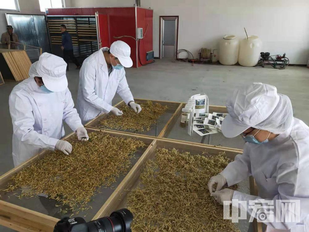抽调工人紧急加工支援武汉的金银花产品3.jpg