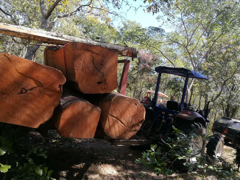 雷沃拖拉机助力赞比亚林业生产