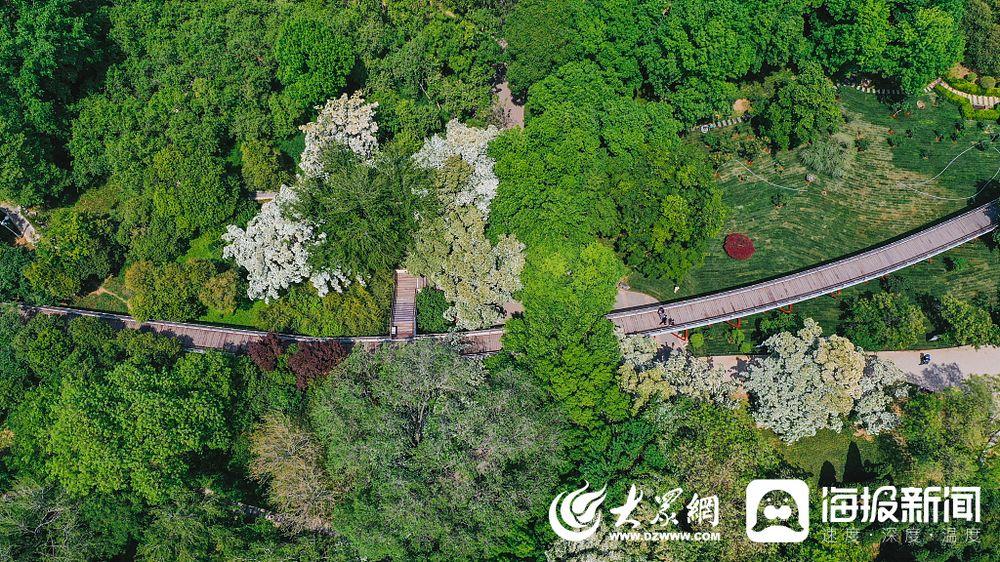 2020年4月26日,济南,航拍泉城公园,满目翠绿春意盎然。(来源 大众网)