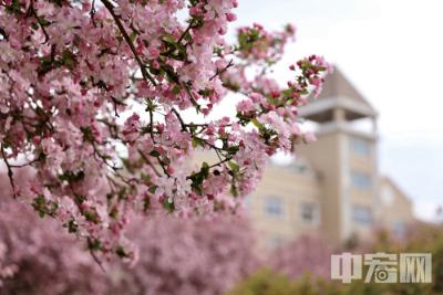 【山东相册】龙口市松岚小区的春天