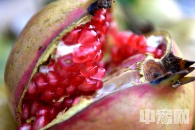 枣庄峄城的石榴红了 丰收的果农乐了