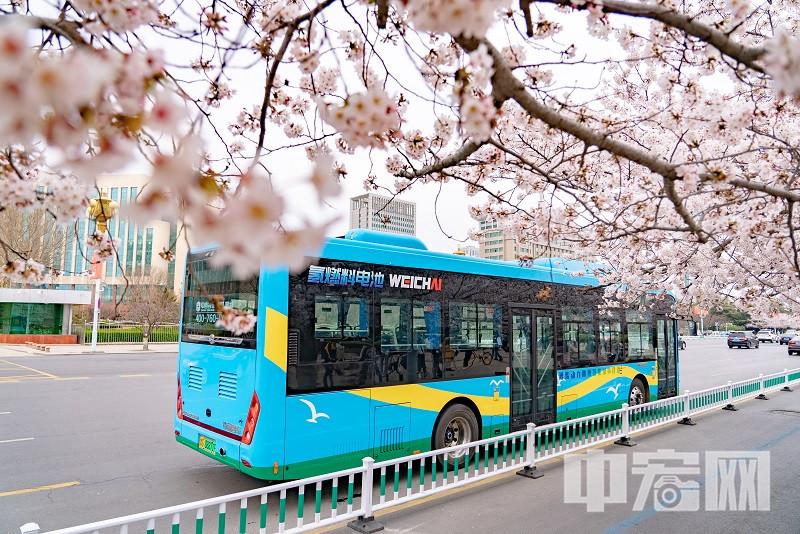 搭载潍柴氢燃料电池的中通公交车,成为了春天亮丽的风景线01.jpg